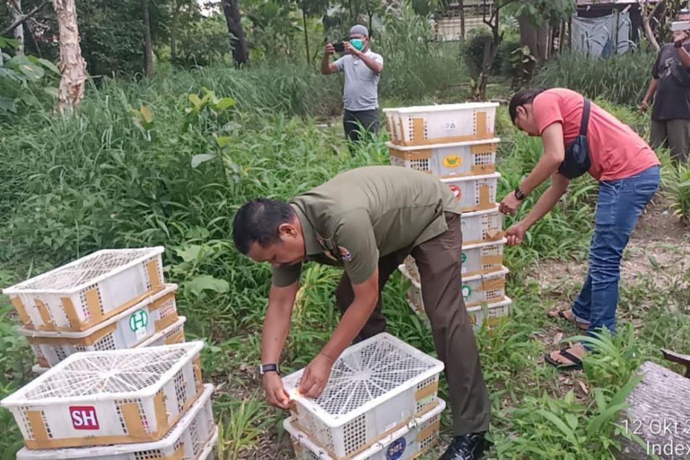 Balai Besar KSDA Riau Hentikan Pengangkutan 840 Burung Tanpa Dokumen