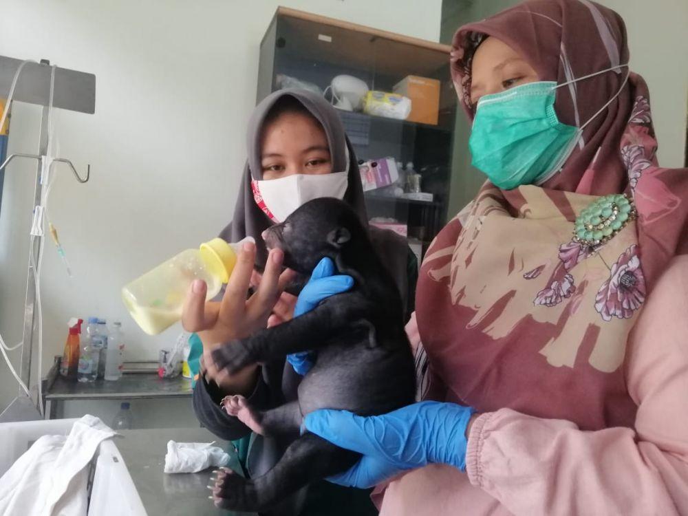 BBKSDA Riau Evakuasi Anakan Beruang Madu di Kuansing