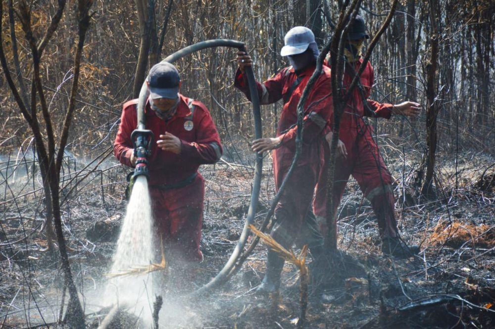 Cagar Biosfer Terbakar 100 Hektare, Sudah 11 Hari Tim BBKSDA Berjibaku Padamkan Api