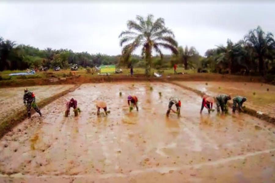 Cegah Krisis Pangan, Koramil di Rohul Siapkan Lahan Pertanian