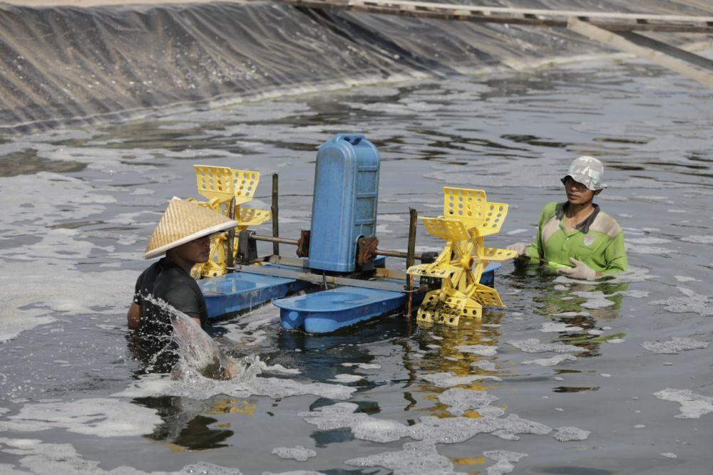 DKP Riau Gelar Pelatihan Bagi Pelaku Tambak Udang Vaname