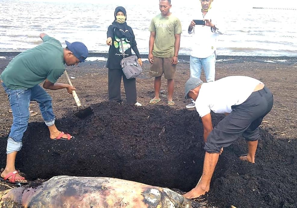 Duyung Ditemukan Mati di Pantai Dumai