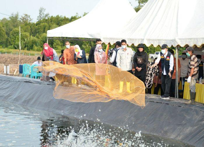 Gubri dan Pj Bupati Bengkalis Panen Udang Vanname di Rupat Utara