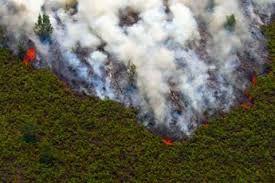 Hutan Riau Terus Dijarah Akibat RTRW tak Tuntas