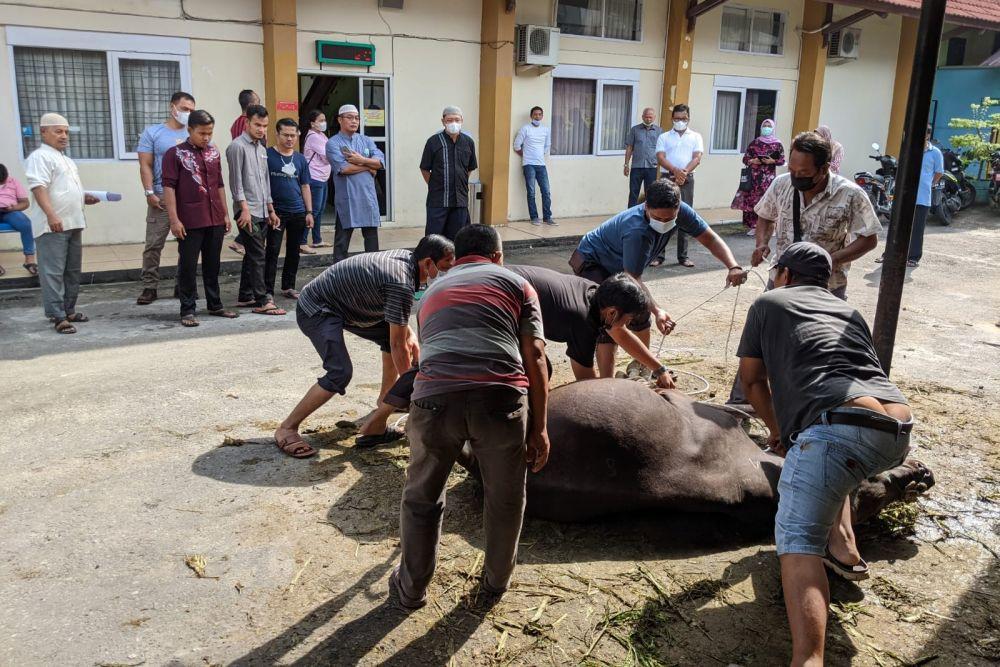 Idul Adha, PN Pekanbaru Sembelih Hewan Kurban
