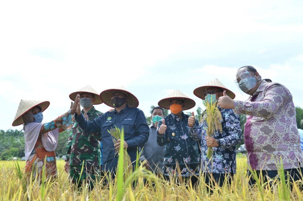 Jaga Ketahanan Pangan Riau, Wagubri Hadiri Panen Raya Padi di Kampar