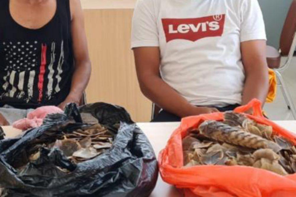 Jual Sisik Tenggiling, Pria di Siak Ditangkap Polda Riau