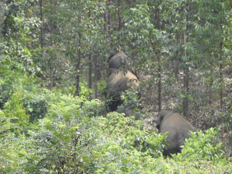 Kawanan Gajah Masuk Perkebunan di Kuansing, BBKSDA Turunkan Tim