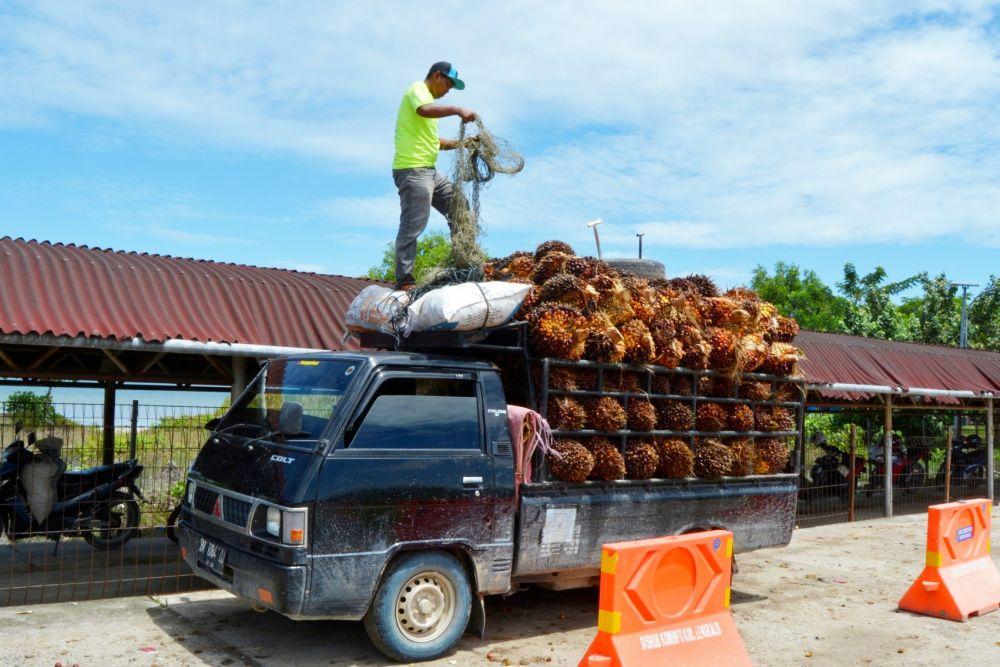 Kelapa Sawit Riau Kembali Alami Kenaikan Harga