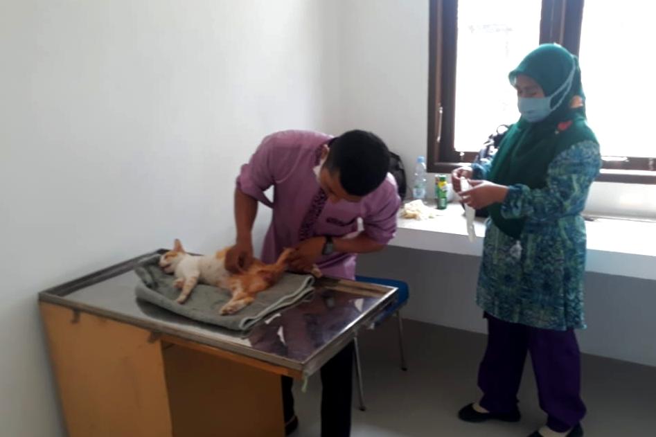 Kenali 3 Jenis Vaksin Kucing dan Manfaatnya