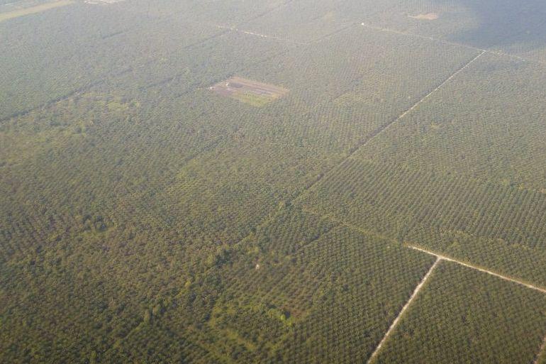 Konsumsi Melambat, Harga Kelapa Sawit di Riau Turun