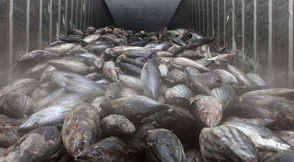 Legislator diskanlut awasi for Fish store reno