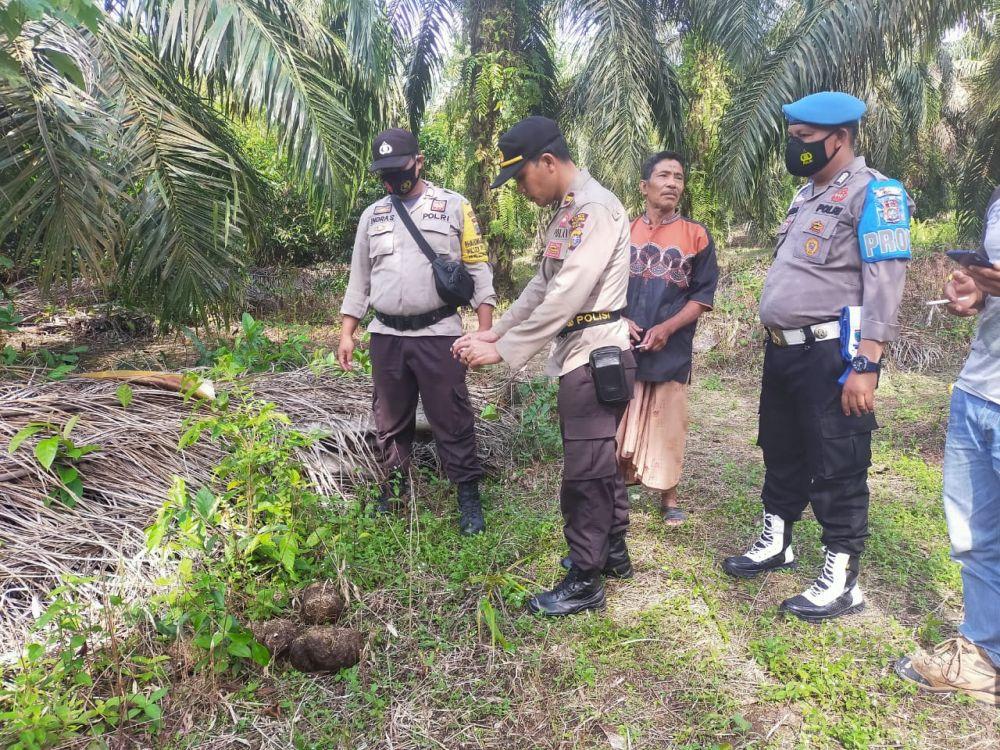 Masuk Kebun Sawit Warga, Polisi dan BKSDA Giring Gajah Liar ke Hutan Tesso Nilo