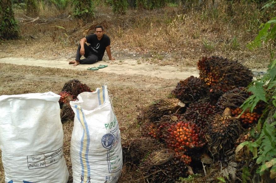 APKASINDO Setuju Pemprov Riau Tak Keluarkan Izin Pengusaha Buka Kebun Sawit Baru