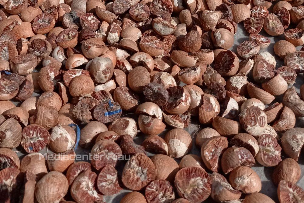 Turun Tipis, Harga Pinang Kering di Riau Masih Dilevel Rp17.490 Ribu per Kg