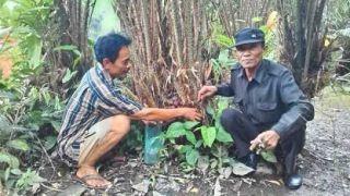 Nikmati Manisnya Salak Pondoh Tanah Gambut Kepulauan Meranti