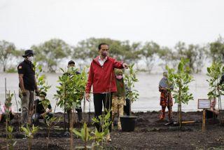 Presiden Jokowi Tanam Mangrove di Bengkalis