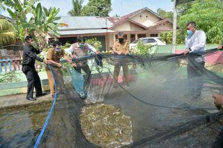 Gubri Panen Ikan Lele di Kampar